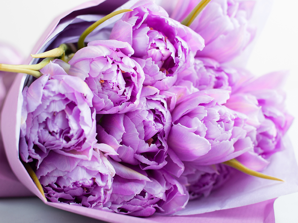 Peonies Signal the Start of Spring
